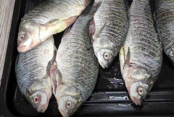 Рыбак научил жарить карасей: чистить и выбирать кости больше не нужно, они прожарились