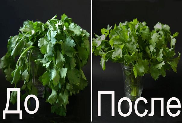 """100 % работающий способ """"оживления"""" зелени (и цветов)"""